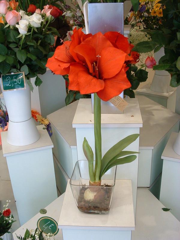 Fleurs artificielles c perraud fleurs for Plantes artificielles lyon